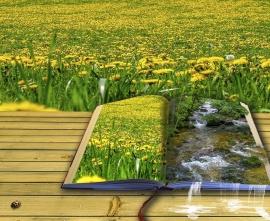 Ksiązka przedstawiająca obrazy przyrody na tle łąki z mleczami